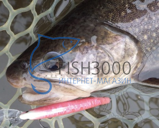 DAIWA - PRESSO DOUBLE CLUTCH 60SS tuned by HMKL